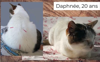 Daphnée, chatte européenne 20 ans, souffrant de maladie/insuffisance rénale chronique et d'arthrose