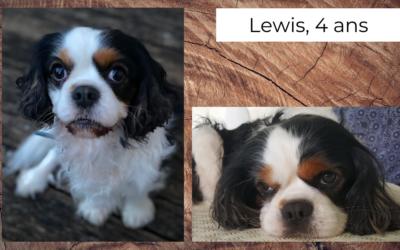 Lewis, Cavalier King Charles de 4 ans, suspicion de syndrome de type Chiari ou syringomyélie