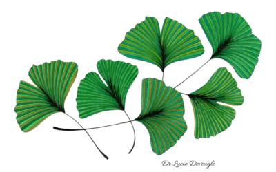 Phytothérapie – Un exemple de prescription