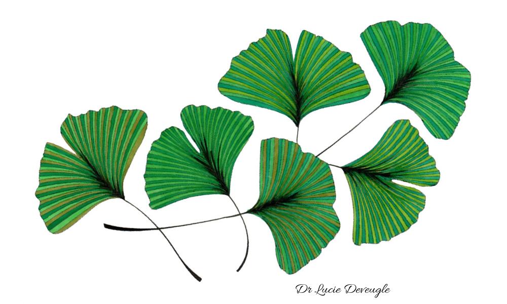 phytothérapie animale plantes