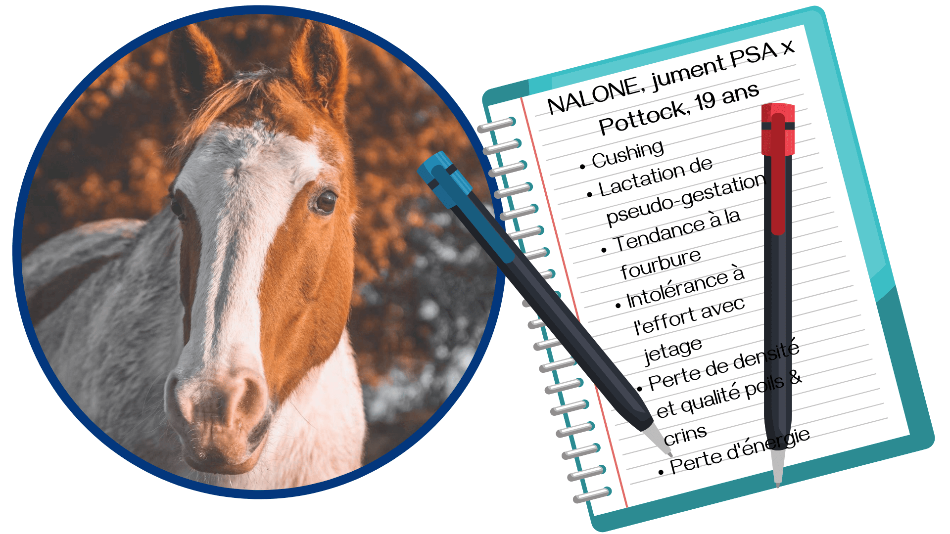 gemmothérapie naturopathie cheval cushing fourbure lactation pseudo-gestation grossesse nerveuse praescend soin naturel médecine douce alternative