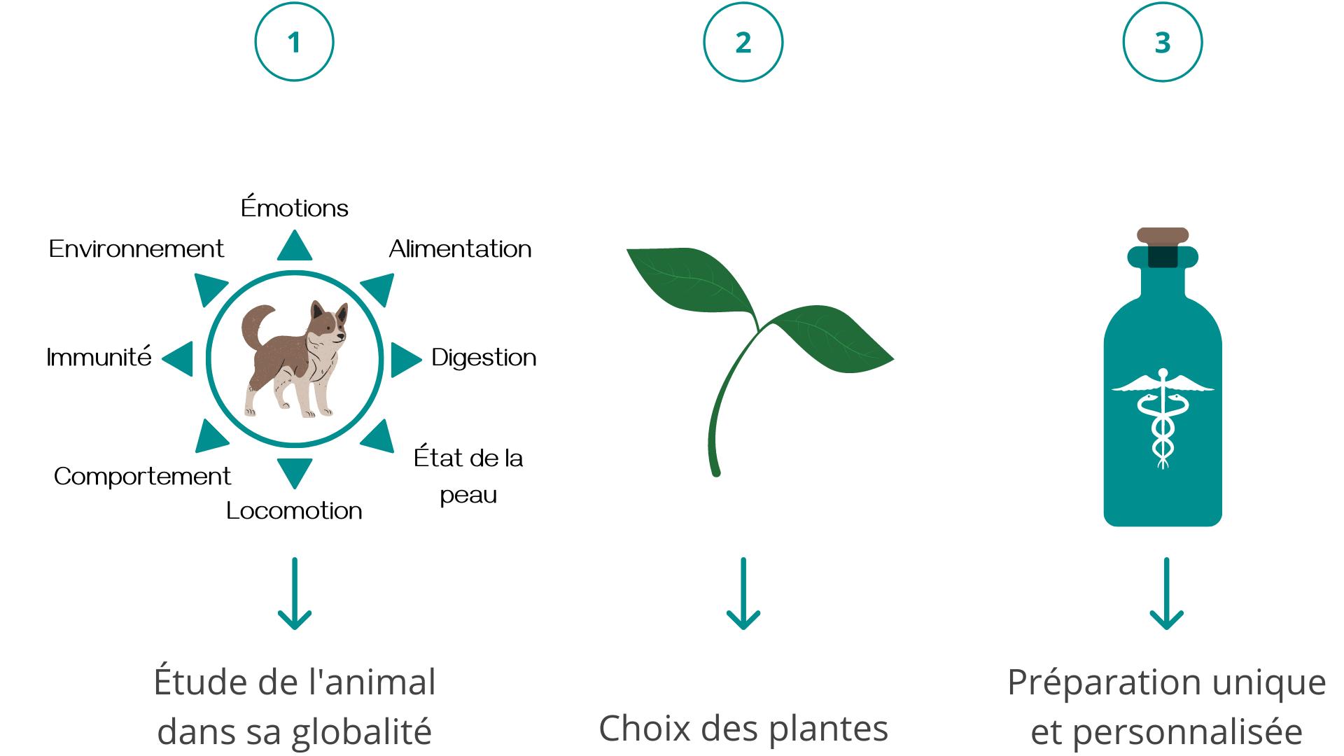 phytothérapie vétérinaire EPS plantes animaux soins naturels
