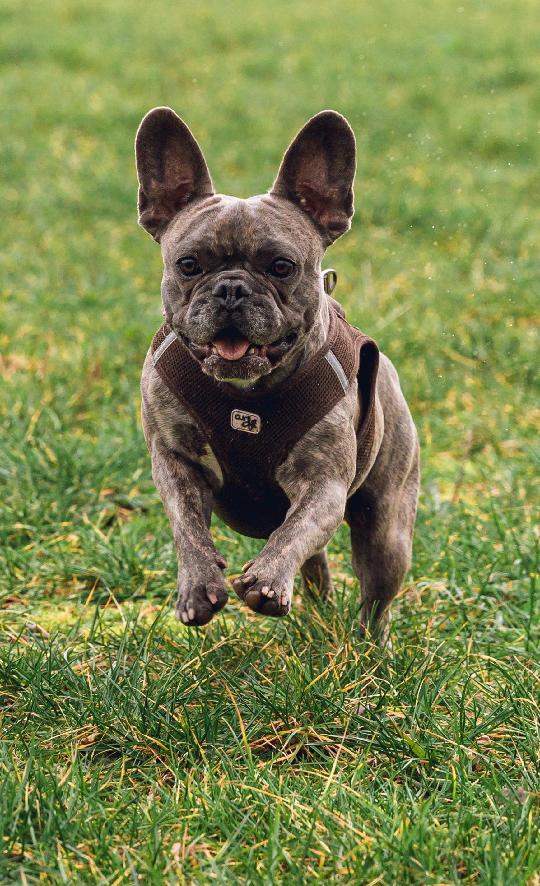 chien médecine vétérinaire naturelle alternative soins naturels plantes