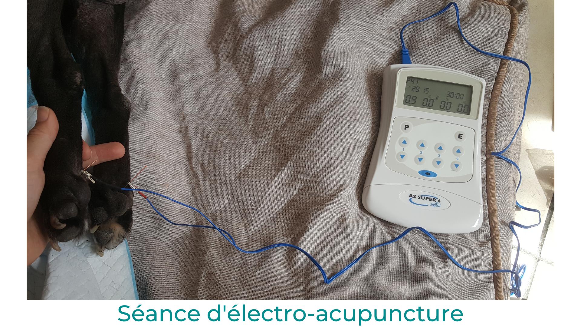 Oz paralysie angiostrongylose électro-acupuncture vétérinaire médecine alternative phytothérapie