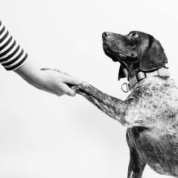 médecine vétérinaire intuitive énergétique soin humain animal communication animale énergétique