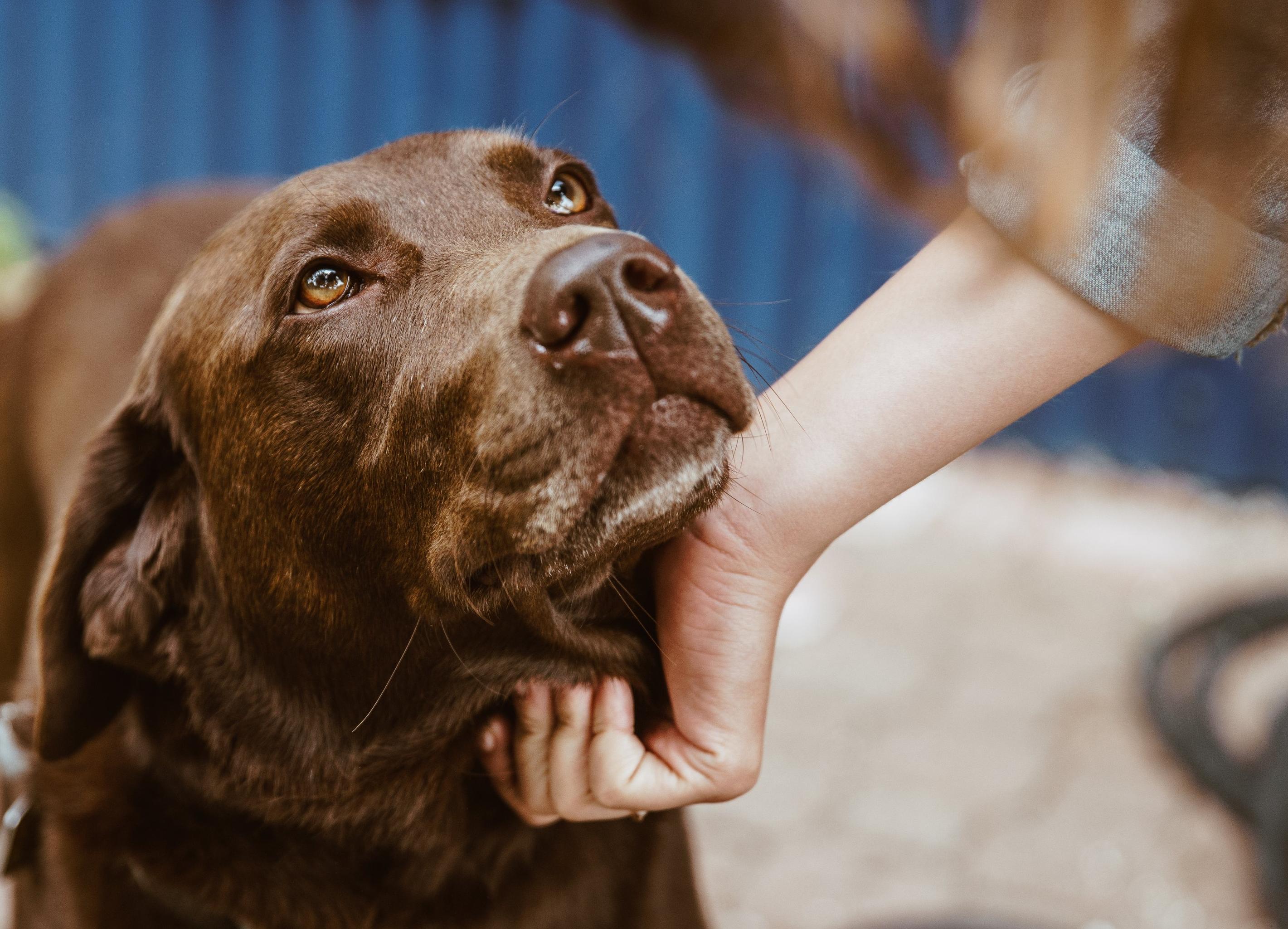 médecine vétérinaire intuitive énergétique soin humain animal communication animale énergétique communication animale